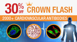 30% off on &quot;Crown Antibodies&quot;.<br>2000+ Antibodies for Cardiovascular Research.