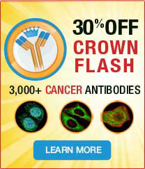 30% off on 3,000+ Cancer Antibodies. Promo code  <span class=text-red >FLASH17</span>.