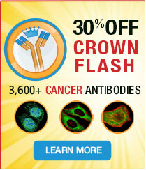 Crown Flash21-30% Off