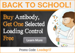 Buy Antibody, Get One  Selected Loading Control Free.