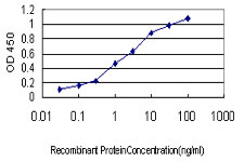 E - ACE Antibody (monoclonal) (M01) AT1024a