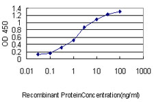 E - BCL2L1 Antibody (monoclonal) (M01) AT1282a