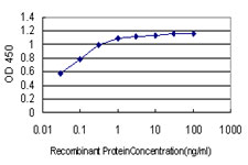 E - BCL9 Antibody (monoclonal) (M01) AT1286a