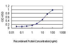 E - BRMS1 Antibody (monoclonal) (M03) AT1312a