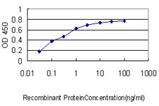 E - BRRN1 Antibody (monoclonal) (M01) AT1313a
