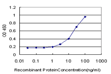E - C19orf10 Antibody (monoclonal) (M03) AT1332a