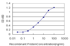 E - C1orf19 Antibody (monoclonal) (M01) AT1335a