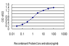 E - C21orf33 Antibody (monoclonal) (M01) AT1343a