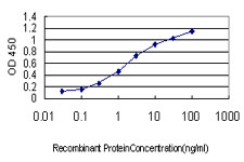 E - C6orf139 Antibody (monoclonal) (M01) AT1348a