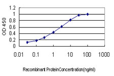 E - CAND1 Antibody (monoclonal) (M01) AT1382a
