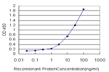 E - CCNK Antibody (monoclonal) (M01) AT1423a