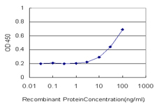 E - CDC45L Antibody (monoclonal) (M01) AT1467a