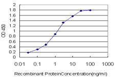 E - CELSR3 Antibody (monoclonal) (M01) AT1492a