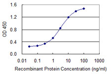 E - CHFR Antibody (monoclonal) (M08) AT1519a