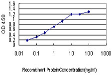 E - CPSF3 Antibody (monoclonal) (M01) AT1610a