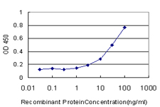 E - CTSW Antibody (monoclonal) (M01) AT1682a