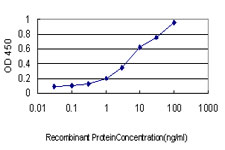 E - CX3CL1 Antibody (monoclonal) (M01) AT1686a