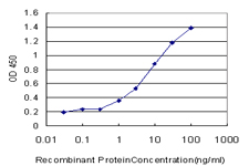 E - FBL Antibody (monoclonal) (M09) AT2006a