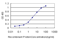 E - GOLM1 Antibody (monoclonal) (M06) AT2239a