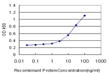 E - GRN Antibody (monoclonal) (M01) AT2266a