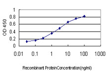 E - GYG1 Antibody (monoclonal) (M07) AT2302a
