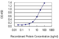 E - HELLS Antibody (monoclonal) (M04) AT2347a