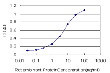 E - HEPH Antibody (monoclonal) (M01) AT2350a
