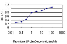 E - HFE Antibody (monoclonal) (M01) AT2361a