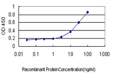 E - HNF4A Antibody (monoclonal) (M04) AT2393a