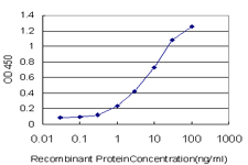 E - HNRNPG-T Antibody (monoclonal) (M01) AT2396a