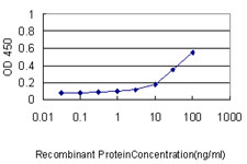 E - ISG20 Antibody (monoclonal) (M01) AT2557a