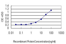 E - LIPG Antibody (monoclonal) (M02) AT2720a
