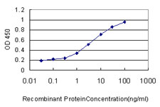 E - MCF2L Antibody (monoclonal) (M01) AT2817a