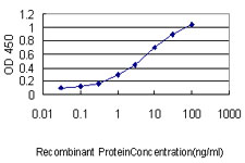E - MEIS2 Antibody (monoclonal) (M01) AT2841a