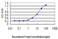 E - MPZ Antibody (monoclonal) (M05) AT2897a