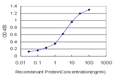 E - MRRF Antibody (monoclonal) (M01) AT2906a