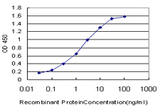 E - NFYB Antibody (monoclonal) (M01) AT3041a