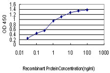 E - NFYB Antibody (monoclonal) (M03) AT3042a