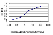 E - NLGN1 Antibody (monoclonal) (M01) AT3062a