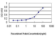 E - NLGN4Y Antibody (monoclonal) (M01) AT3063a