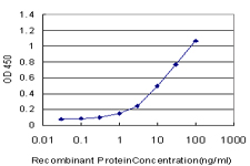 E - OPHN1 Antibody (monoclonal) (M03) AT3150a