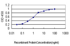E - PCTP Antibody (monoclonal) (M01) AT3241a