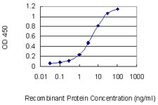E - RASSF8 Antibody (monoclonal) (M01) AT3583a