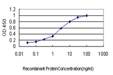 E - RIN1 Antibody (monoclonal) (M01) AT3641a