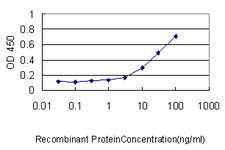 E - SESN2 Antibody (monoclonal) (M03) AT3830a