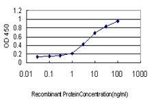 E - SMAD5 Antibody (monoclonal) (M01) AT3944a
