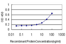 E - SYN1 Antibody (monoclonal) (M07) AT4120a