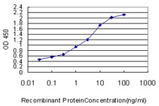 E - SYNGR2 Antibody (monoclonal) (M01) AT4122a