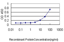 E - TEAD1 Antibody (monoclonal) (M01) AT4201a