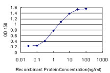 E - USF1 Antibody (monoclonal) (M02) AT4477a
